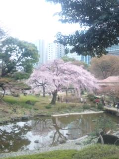 桜の向こうに